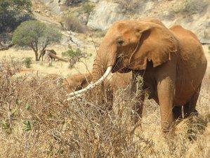 3 Days Wings over Amboseli Safari in Kenya