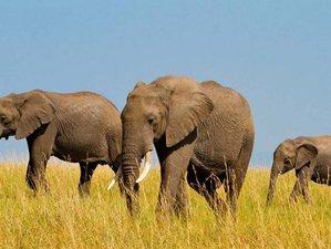 6 Days Luxury Safari Adventure in Tanzania