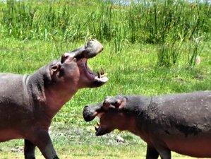 5 Days Luxury Private Safari in Aberdare, Lake Nakuru, and Maasai Mara Migration Safari in Kenya