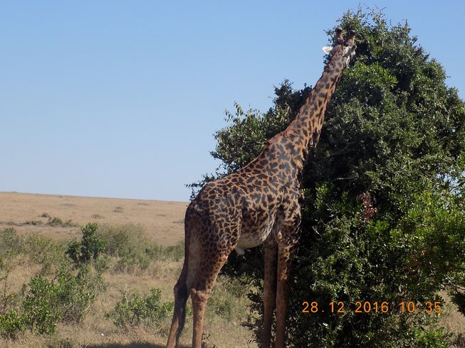 4 Days Breathtaking Budget Kenya Safari