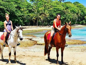2 Day Dolphin Tour and Horse Riding Holiday in Puerto Viejo, Costa Rica