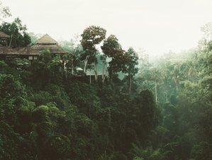 Lodging: Treehouse Safaris
