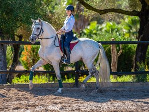 20 Day Work Remote and Ride Dressage or Trails on Mallorca, Balearic Islands