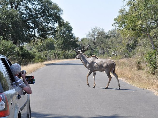Days The Best Of Safari South Africa And Swaziland - 10 best safaris in africa