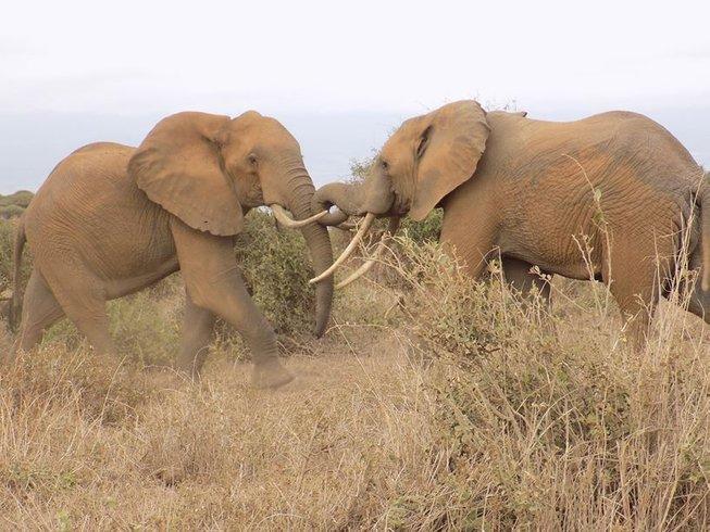 4 Days Breathtaking Budget Kenya Safari