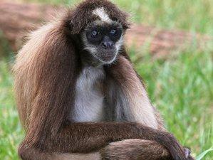 3 Day Honeymoon Wildlife Tour in Tena Canton, Ecuador