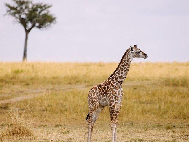 12 Days Walking Safari South Africa, Botswana, and Zimbabwe