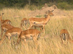 6 Days Camping Safari in Masai Mara ,Lake Nakuru ,Amboseli , Kenya