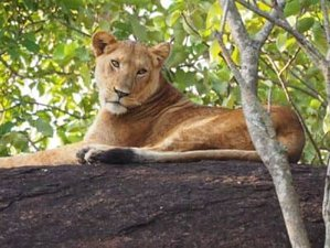 3 Days Boat Trip and Safari in Queen Elizabeth National Park, Uganda