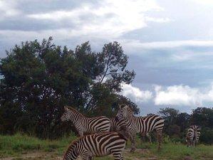 7 Days Serengeti Wildebeest Migration Budget Safari in Tanzania