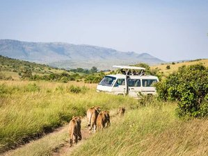4 Days Hemingway Safari in Maasai Mara and Lake Nakuru, Kenya