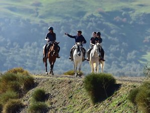 8 Day Silver Package: Luxury Self-Catering Horse Riding Holiday in Andalusia
