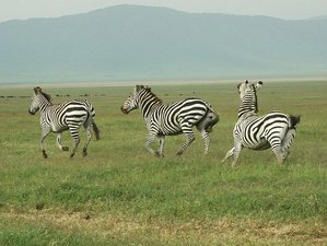 6 Days Rongai Route Kilimanjaro Trekking and Safari in Tanzania