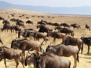 7 Days Central and South Serengeti Great Migration in Tanzania