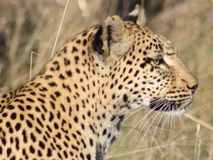 12 Days Wildlife Safari Tour in South Africa and Swaziland