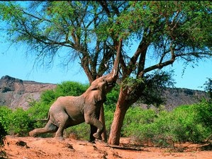 20 Days Luxurious Camping Safari in Namibia