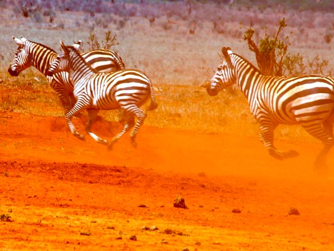 2 Days Game Park Safari in Kenya