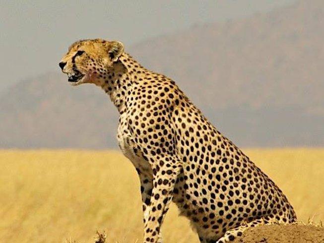 7 Days Magnificent Tanzania Safari
