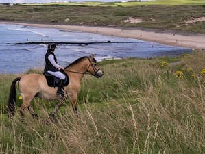 7 Days Castles, Coast, and Countryside Adventure Horse Riding Holiday in Northern Ireland, UK