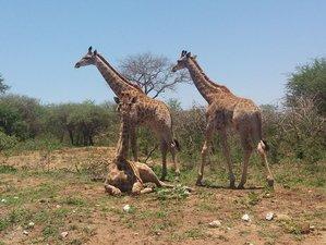 3 Days Durban to Pretoria Safari in South Africa