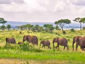 8 Days Northern Tanzania Safari Tour