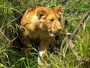 3 Day Maasai Mara Wildlife Safaris in Kenya