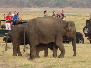 2 días de safari de elefantes en el Parque Nacional Udawalawe, provincia de Uva