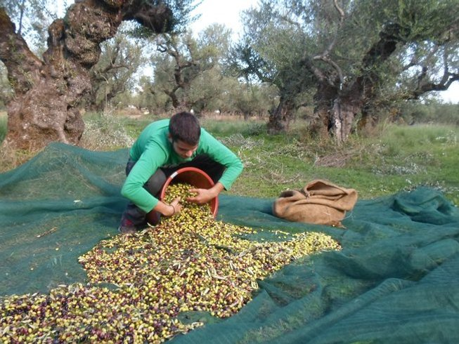 14 Days Zakynthos Culinary Vacations & Olive Picking in Greece
