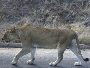 6 Days Kruger National Park and Blyde River Canyon Safari in South Africa
