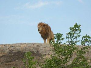 7 Days Machame Route Kilimanjaro Safari and Trekking