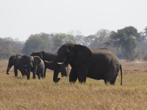 4 Days Adventure Safari in Kafue National Park, Zambia
