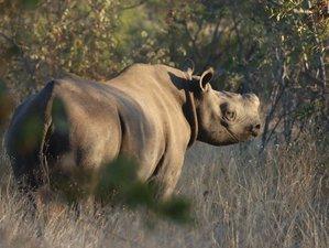 3 Tage Busch Erlebnis und Rhino Safari im Kruger Nationalpark, Südafrika