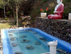 6 Tage Meditation, Yoga und Veganer Kochkurs in Malaga, Spanien