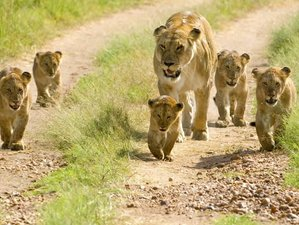 6 Days Lake Manyara, Serengeti, and Ngorongoro Safari in Tanzania