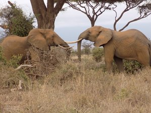 6 Day Kenya Lodge Safari in Maasai Mara, Lake Nakuru, and Amboseli