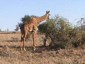 4 Days Best Safaris in Kenya