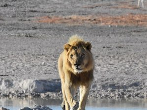 7 Days Guided Etosha National Park Safari, Namibia With Exciting Trips to Windhoek and Sossusvlei