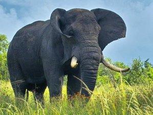 4 days Guided Kidepo Valley National Park Safari in Uganda