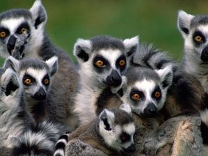 "12 Days ""Land of Contrast"" Safari in Madagascar"