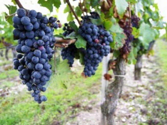 5 Days Bordeaux Wine Tours