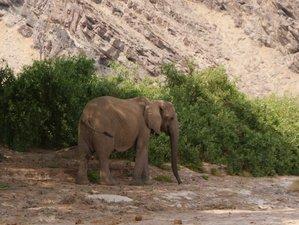 9 Days Discover Safari in Namibia