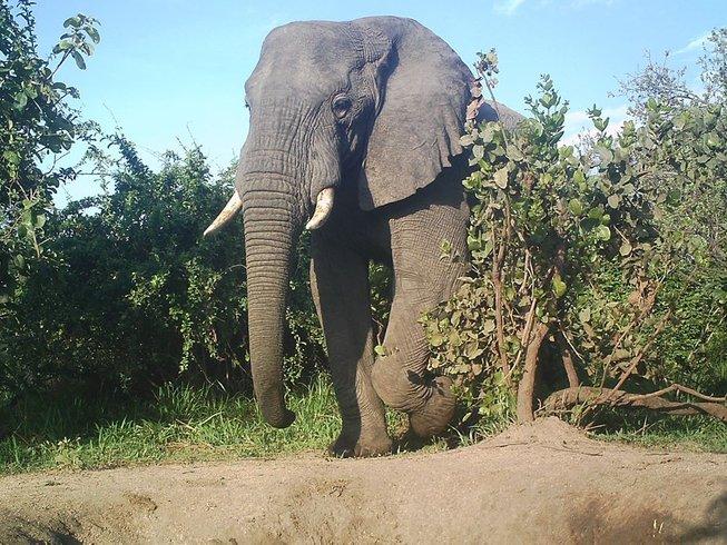 3 Days Mikumi National Park Safari in Tanzania