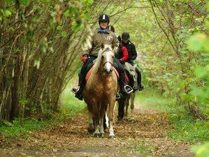 3 Days Experienced Horse Riding Holiday in Muhu, Estonia