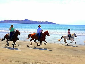 8 Day Old Spanish Trail & Pacific Beaches - the Best Horse Riding Holiday in Santa Cruz, Guanacaste