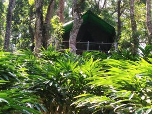 3 Day Jungle Yoga Retreat on Tree Top Tent House in Munnar