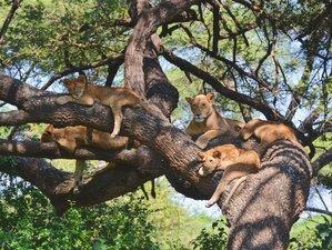 8 Days Camping Safari in Serengeti, Ngorongoro, Tarangire, Lake Manyara National Parks, Tanzania