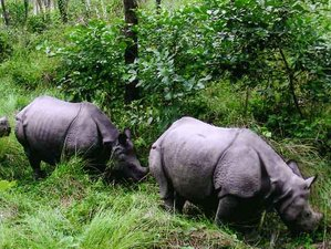5 Day Fascinating Chitwan National Park Safari in Nepal