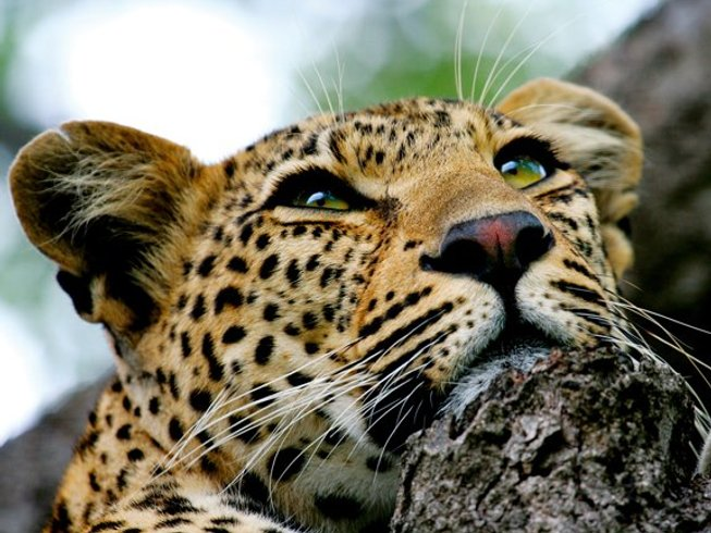 4 Days Chobe National Park Safari
