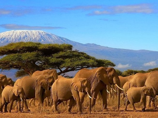 6 Days Marangu Route Kilimanjaro Safari and Trekking