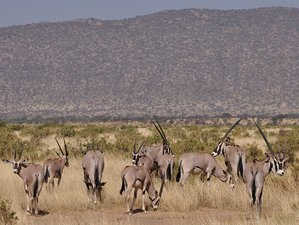 3 Days Customized Adventure Safari in Samburu National Reserve, Kenya